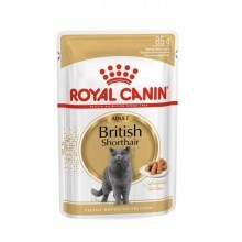 Royal Canin kapsička British Shorthair 12 x 85 g