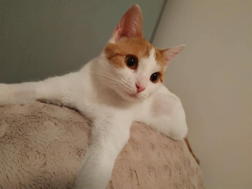 Šťavnaté kočička obrázek