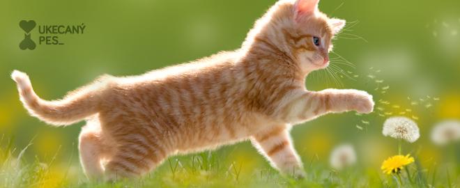 Kočičí hrátky 2f06cf5c02