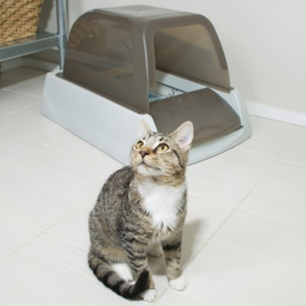 ways to train your cat to use the litter box